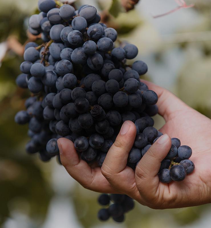 Itinéraire amoureux du vin